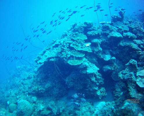 curacao_diving_reef
